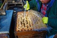 Maßnahmen gegen Varroa Milben