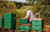 Varroa-Behandlung und Durchsicht des Bienenvolkes